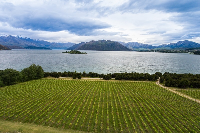 Best New Zealand Sauv Blanc wines