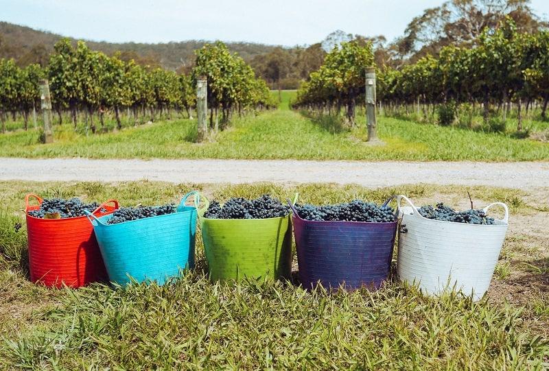 best Pinot Grigio 2015 wines
