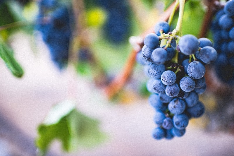 best blueberry wine for consumption