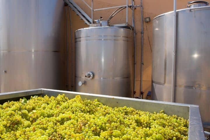 Castoro Cellars Estate Grown Chardonnay