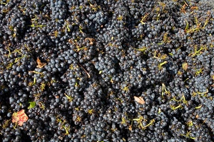 Differences between Pinot Grapes