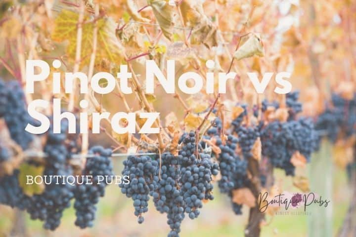 Pinot Noir vs Shiraz