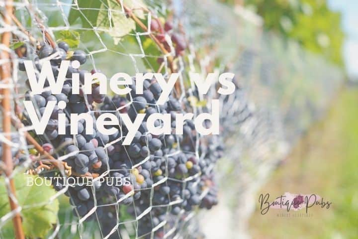 Winery vs Vineyard