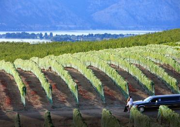 Best Wineries in Chelan
